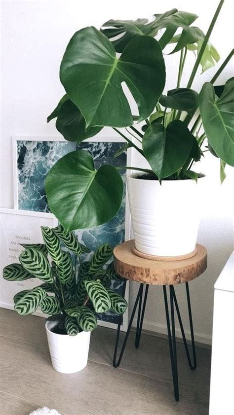 43 Luxury Indoor Plants Ideas For Living Room To Make Your